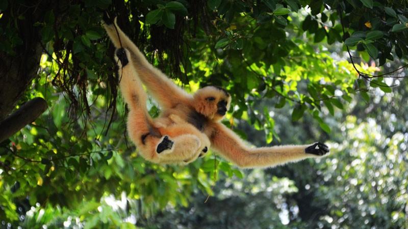 Thế giới hoang dã vườn thú Đầm Sen