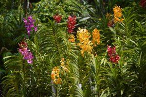 Đảo Lan rừng