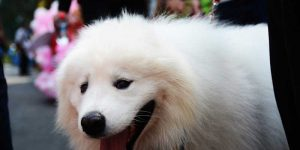 Lễ hội cún cưng