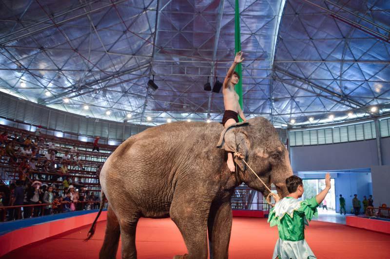 voi châu Á làm xiếc