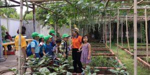 Học sinh trải nghiệm phương pháp trồng rau sạch tại CVVH Đầm Sen