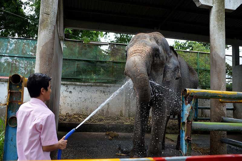 voi châu Á
