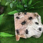 Tiêu bản côn trùng