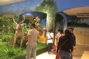 Nhà trưng bày tiêu bản động vật