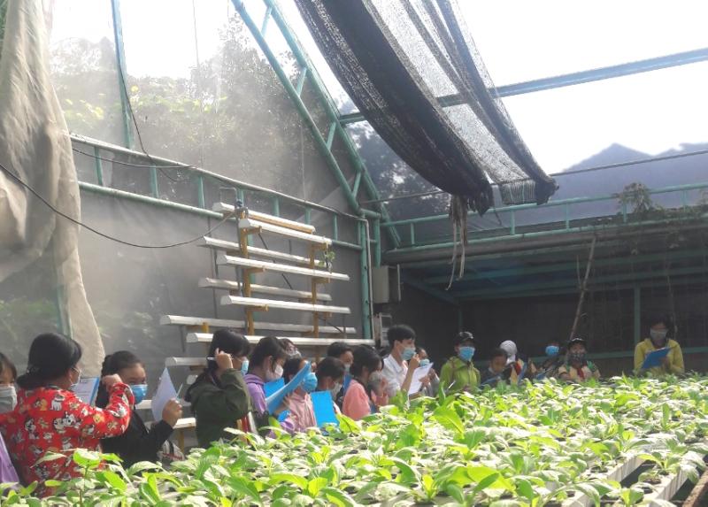 Trải nghiệm trồng rau thủy canh của học sinh trường THCS Tân Kiên tại CVVH Đầm Sen 3
